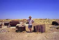 Logging the Petrified Forest Holbrook, Arizona