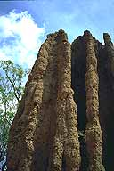 A picture of a Cathedral Termite Mound; Stuart Highway near Darwin; Northern Territory, Australia