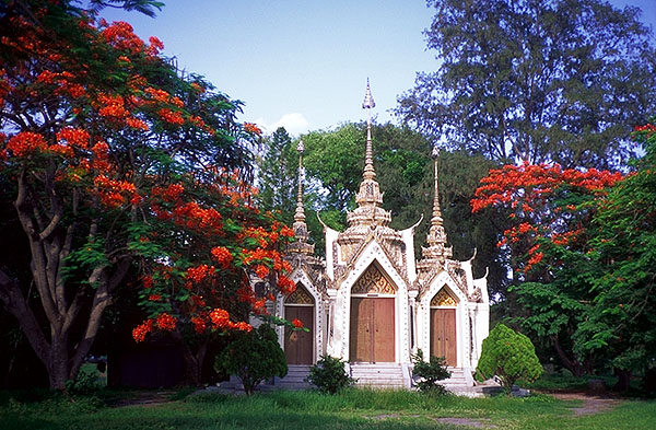 Temple Among Flame Trees<br>Ayuthaya, Thailand: Ayuthaya, Thailand : Temples; The Natural Order.