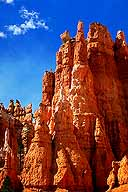 Hoodoos :: Bryce Canyon National Park :: Utah, USA