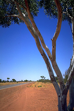 Ghost Gums<br>Along the Stuart Highway<br>Northern Territory, Australia: Northern Territory, Australia : The Natural Order.