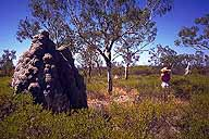 Termite Mound :: with Katrin for perspective :: Gregory Highway :: Queensland, Australia