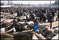 The Livestock Market ::  :: Kashgar :: Xinjiang, China