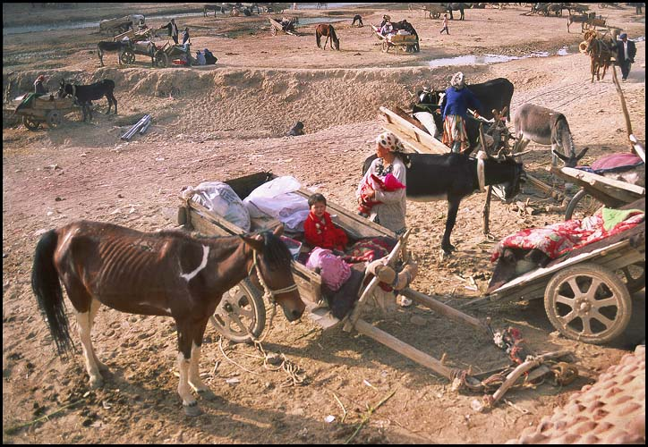 The Thursday Market<br>Kuqa :: Xinjiang, China: Kuqa, Xinjiang, People's Republic of China : People You Meet; Beasts of Burden.