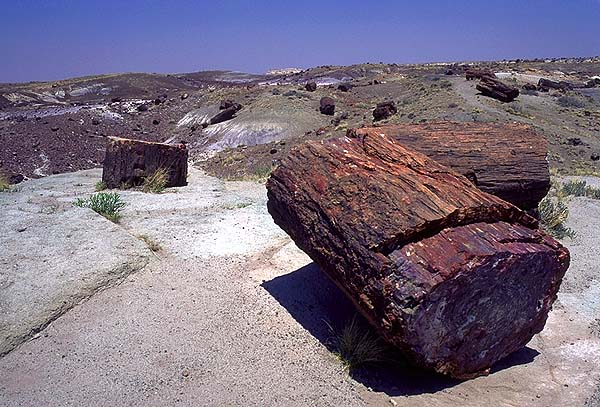 A Petrified Vale<br>Petrified Forest National Park, Arizona: Petrified Forest National Monument, Arizona, United States of America : Geological Formations.