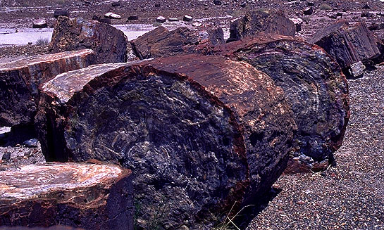Petrified Logs<br>Petrified Forest National Park, Arizona: Petrified Forest National Monument, Arizona, United States of America : Geological Formations.