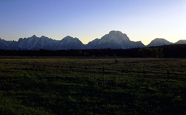 A Grand Tetons Sunset w/ Pronghorn<br>Grand Teton National Park<br>Wyoming, USA: Grand Tetons National Park, Wyoming, United States of America : Sunsets; The Natural Order.
