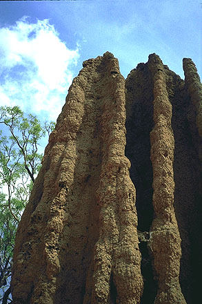 Cathedral Termite Mound<br>Stuart Highway near Darwin<br>Northern Territory, Australia: Northern Territory, Australia : The Natural Order; Abstractions.