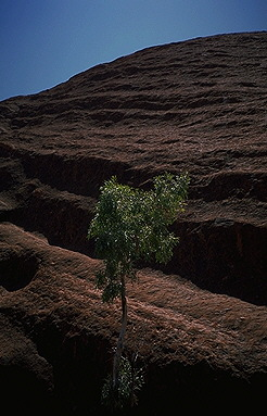 Uluru (Ayers Rock)<br>Northern Territory, Australia: Uluru (Ayer's Rock), Northern Territory, Australia : Geological Formations; Abstractions.